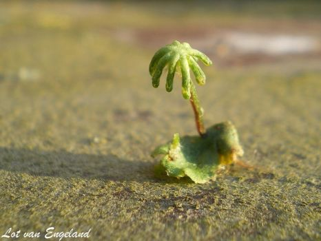 little palmtree by Lott-photo