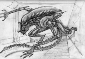 Predator Alien Sketch by Newbeing