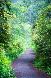 path through the woods by pungen