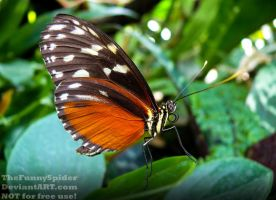 Colorful exotic Butterfly in german Orchid House by TheFunnySpider