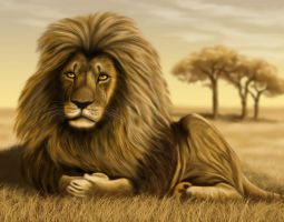 Lion by ravenscar45