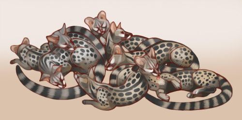 Pile of Genets by Servaline