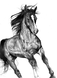 Horse Pencil Drawing by Asten-94
