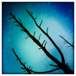 Retro Last Day of a Tree by webworm