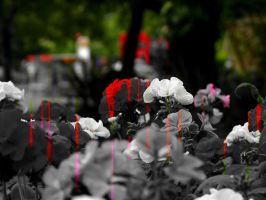 Color life by Alimba