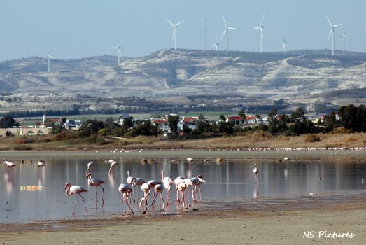 Flamingos and windmills by Poolbandit