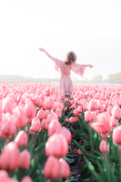 Pink tulips by thefirebomb