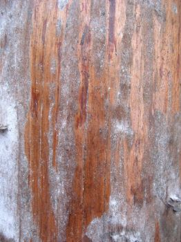 weathered wood by jesterrysources