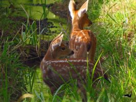 Deer Hiding In Ditch by wolfwings1