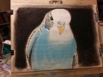 Parakeet completed by EsBest