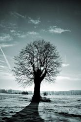 Old Lonely Tree by tomsumartin
