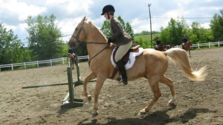 English 9 by vorbei-horse-stock