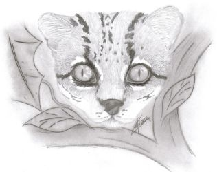 Margay by Howling-Silver