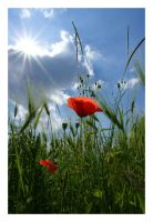 Roter Mohn by mARTinimal