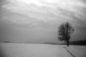 old winter by renesmexd