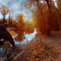 autumn trees by the river by ildiko-neer