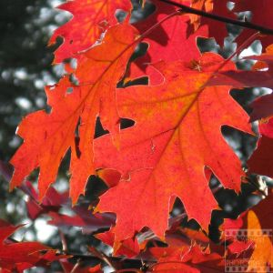 Day 335: Autumn's Best by poserfan-pholio