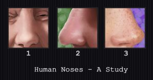Human Noses - A Study by PointyHat