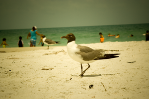 Mr. Seagull by BreAnn
