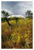 Natural Umbrella by Morillas