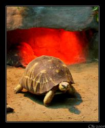 Evil Turtle From Hell by Oki666