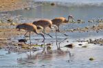 Cranes in Beluga Slough by MSimpsonPhotos