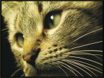 ...Cat by pagone