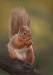Red Squirrel by jinkies36