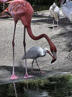 Flamingo and Friends by OneClownShoe
