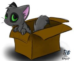 Kitty in a Box by The-Snowlion