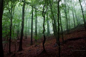 Foggy Forest 2 by Janine-Autumn