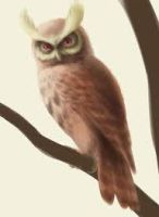 real owl pokemon by Guadisaves02