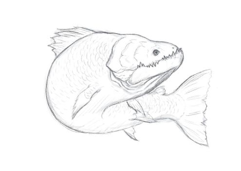 Fish Sketch by Luneder