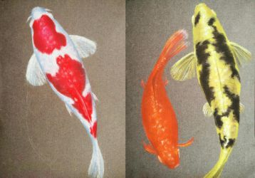 Japanese Koi fish by favouriteflavor