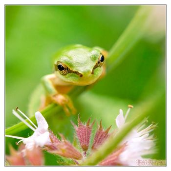 Pretty in green by DianePhotos