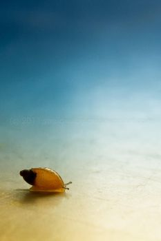 Little Snail by TinasArtwork