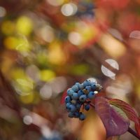 colours of autumn VII by Wilithin