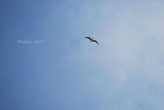 Seagull in the sky. by PhotoLaura