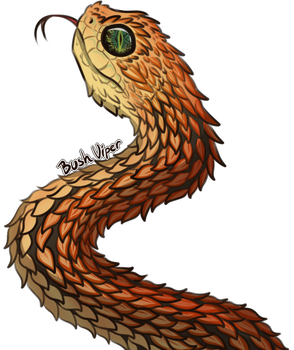 Bush viper by Charizardsparks
