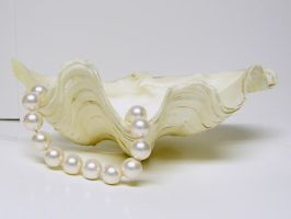 Clam Shell with Pearls Stock7 by NoxieStock