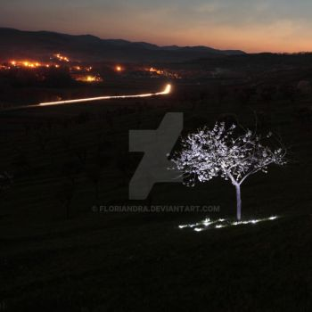 Illuminated tree by Floriandra