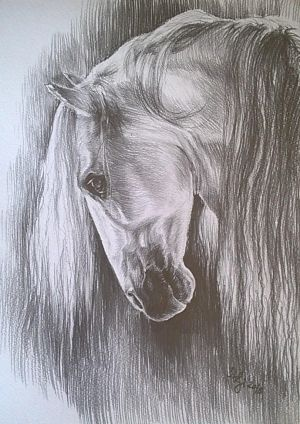 Horse by sstefiart