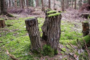 Tree Stump III - Stock Photo by KarvinenStock