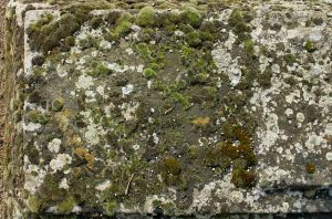 Stone Texture - 7 by AGF81