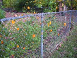 :build your fences: by CryRainDrops