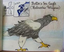 Steller's Sea Eagle - Animal of July 2016 by MoonyMina