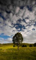 Lone Tree at Kilcoy by eye-of-tom