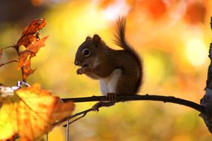Autumnal Squirrel by XxQuothTheRavenxX