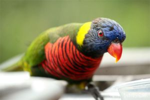 JBP - Lory Love by furryphotos