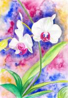Orchid Rainbow by LoVeras